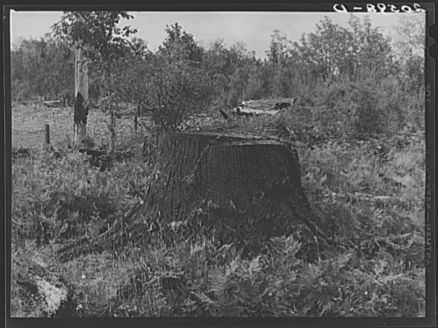 Character of roadside approaching Arnold farm. Western Washington, Thurston County, Michigan Hill. See general caption number 36