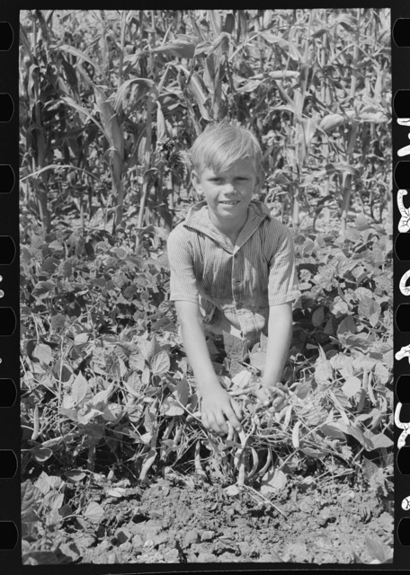 Child of Ernest W. Kirk, Jr., Ordway, Kansas, holding back the string bean vines on the farm