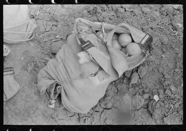 Citrus picker's bag, Weslaco, Texas
