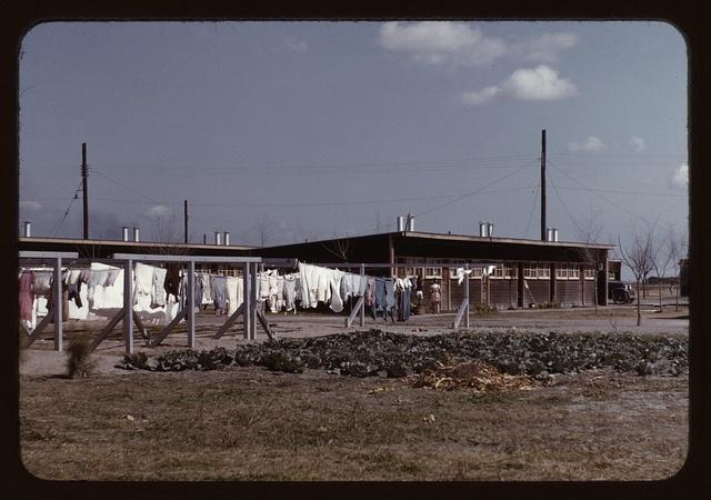 Community clothesline, FSA ... camp, Robstown, Tex.