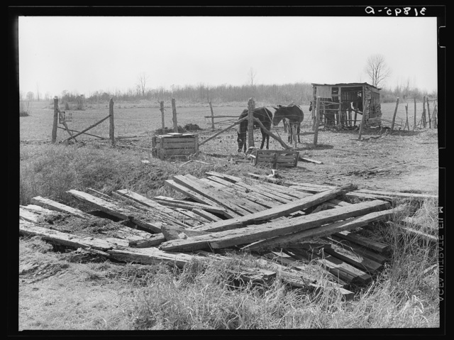 Condition of crossing over ditch. Mules' shack in background on temporary farmstead. Transylvania Project, Louisiana. Until recently this was occupied by Negro sharecropper