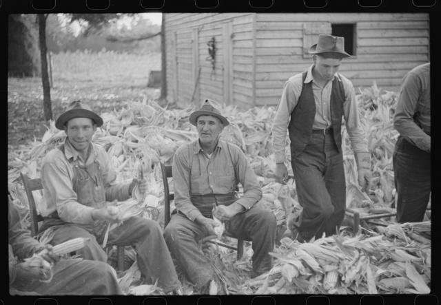 Corn shucking on farm near the Fred Wilkins place, Granville County, North Carolina