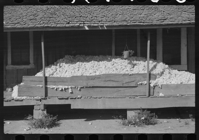 Cotton on porch of Negro tenant's house. They store it there until there is enough picked to make a bale before taking it to plantation gin. Mileston, Mississippi Delta, Mississippi