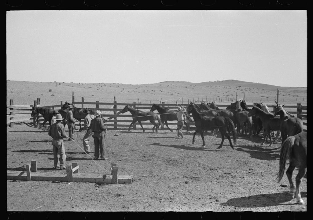 Cowboys roping and saddling horses. Corral at ranch near Marfa, Texas