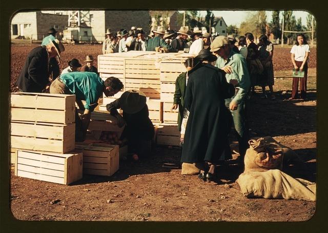 Distributing surplus commodities, St. Johns, Ariz.