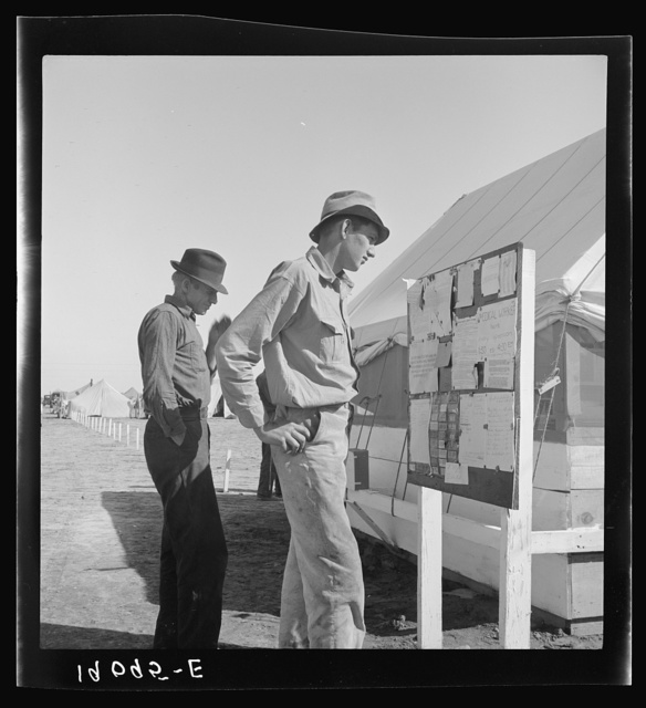 Farm Security Administration (FSA) migratory labor camp (emergency). Migratory workers, in camp for the pea harvest, scan the bulletin board at entrance