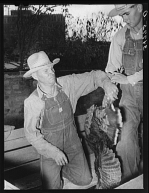 Farmer unloading turkeys from his truck at cooperative poultry house. Brownwood, Texas