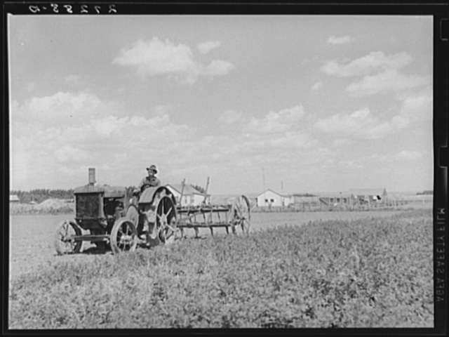 Farmer with tractor and cultivator. Fairfield Bench Farms, Montana
