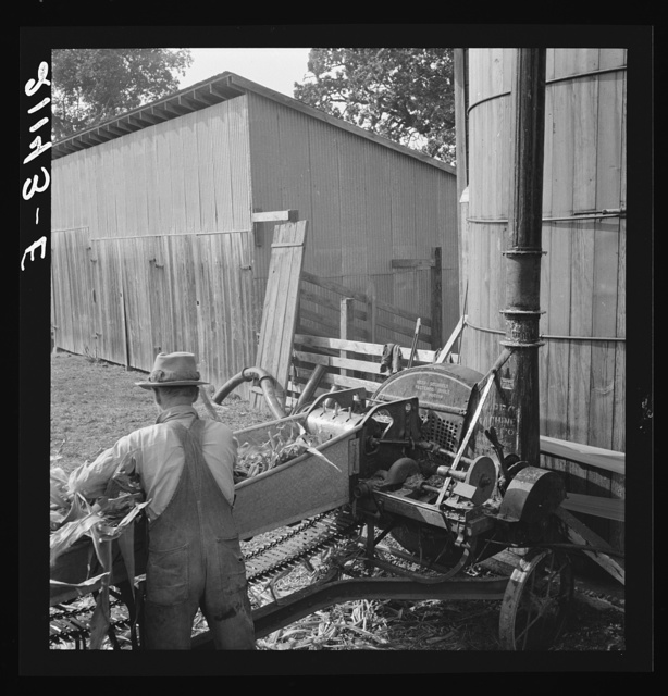 Farmers feeding corn into cooperatively owned ensilage cutter. Near W Street at Carlton, Yamhill County, Oregon. General caption number 58