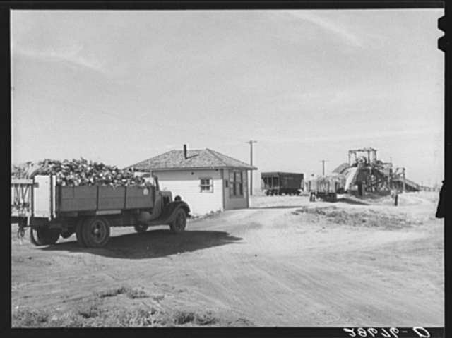 Farmer's truck driving into scale house at sugar beet dump. Adams County, Colorado