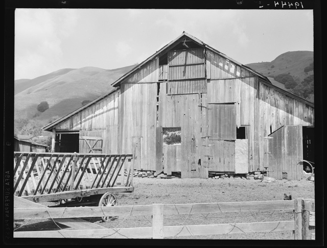 Farmyard of small Italian farmer. Santa Clara County, California
