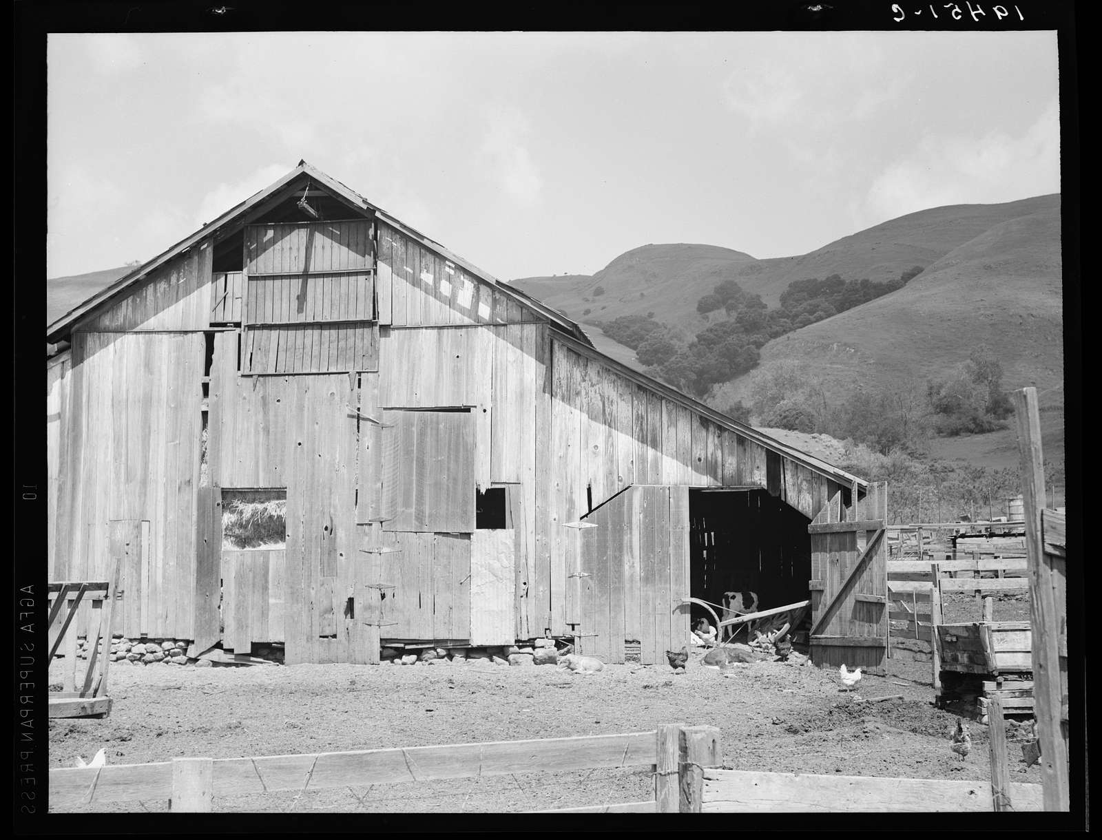 Farmyard of small Italian farmer. Santa Clara County, California