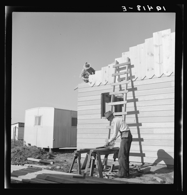 Father and son, recent migrants to California, building house in rapidly growing settlement of lettuce workers on fringe of town. Salinas, California