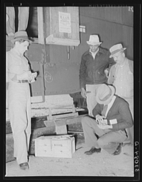 Federal inspection of strawberries with growers in background. Hammond, Louisiana