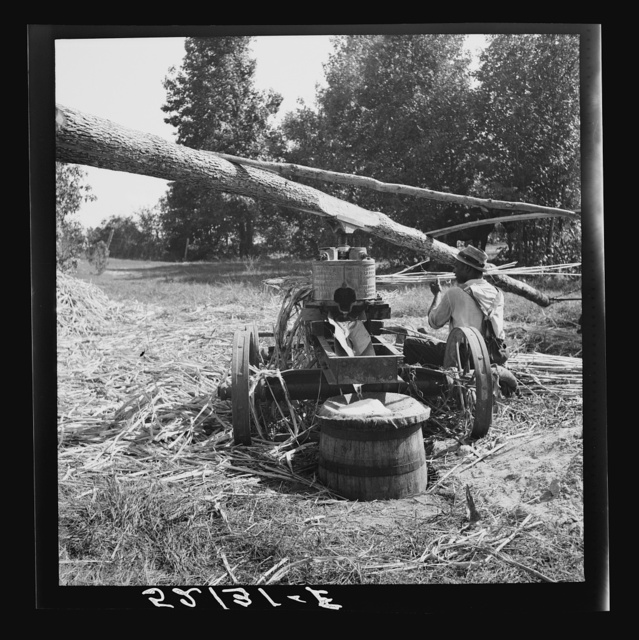 Feeding the sorghum cane into the mill to make syrup on property of Wes Chris, a tobacco farm of about 165 acres in a prosperous Negro settlement near Carr, Orange County, North Carolina