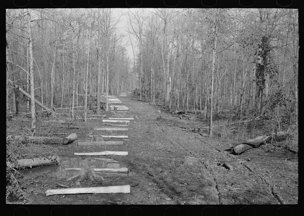 Fenceposts in lane through woods, ready to be set in place, Chicot Farms, Arkansas