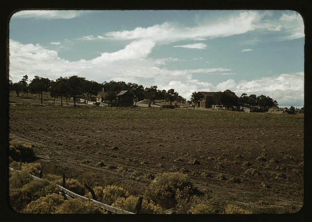 Field of beans and farmstead of Bill Stagg, homesteader, Pie Town, New Mexico