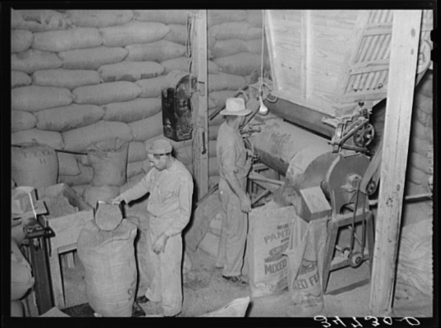 Filling bags with feed made from peanut shells and blackstrap molasses. Peanut-shelling plant. Comanche, Texas