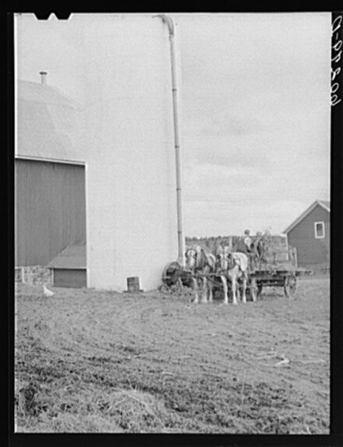 Filling silo. Chippewa County, Wisconsin