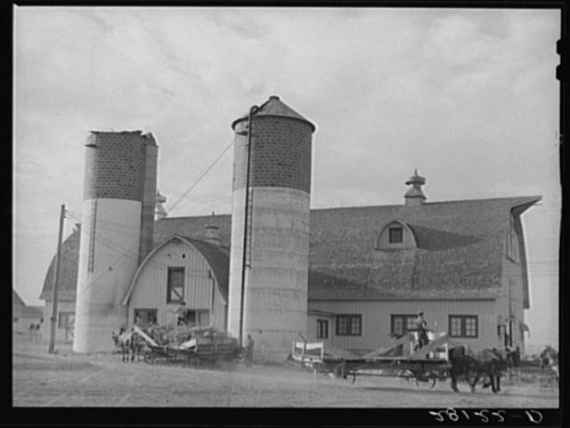 Filling silos with green corn. Dairy farm, Dakota County, Minnesota
