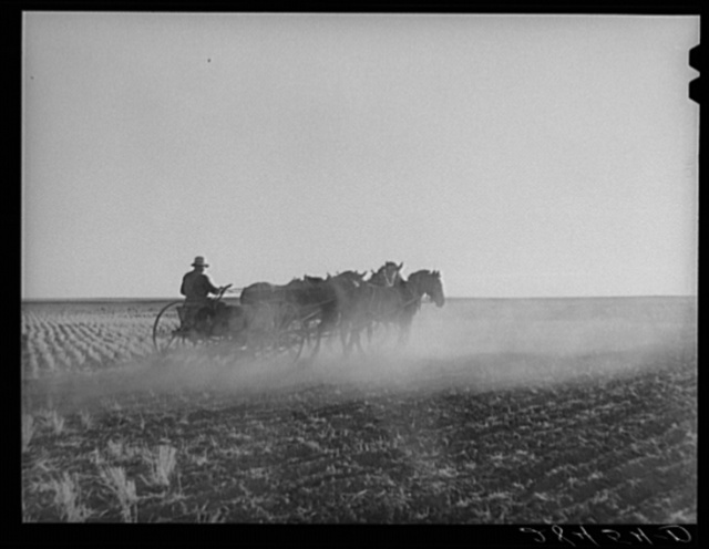 Fred Schmeeckle, FSA (Farm Security Administration) borrower, drilling wheat on his dry-land farm. Weld County, Colorado