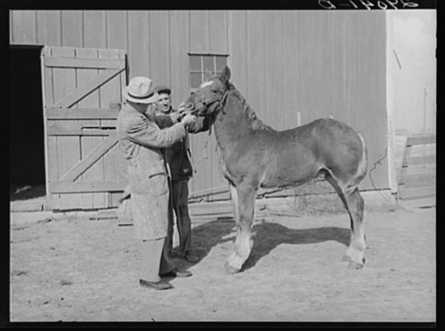 FSA (Farm Security Admninistration) supervisor examines colt owned by Fred Maschman, TP client. Maschman uses two teams to farm his land. Iowa County, Iowa