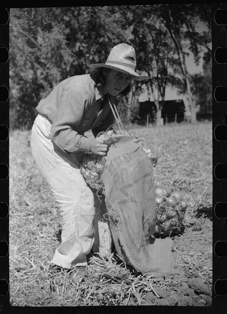 Girl fills bag with onions, Delta County, Colorado