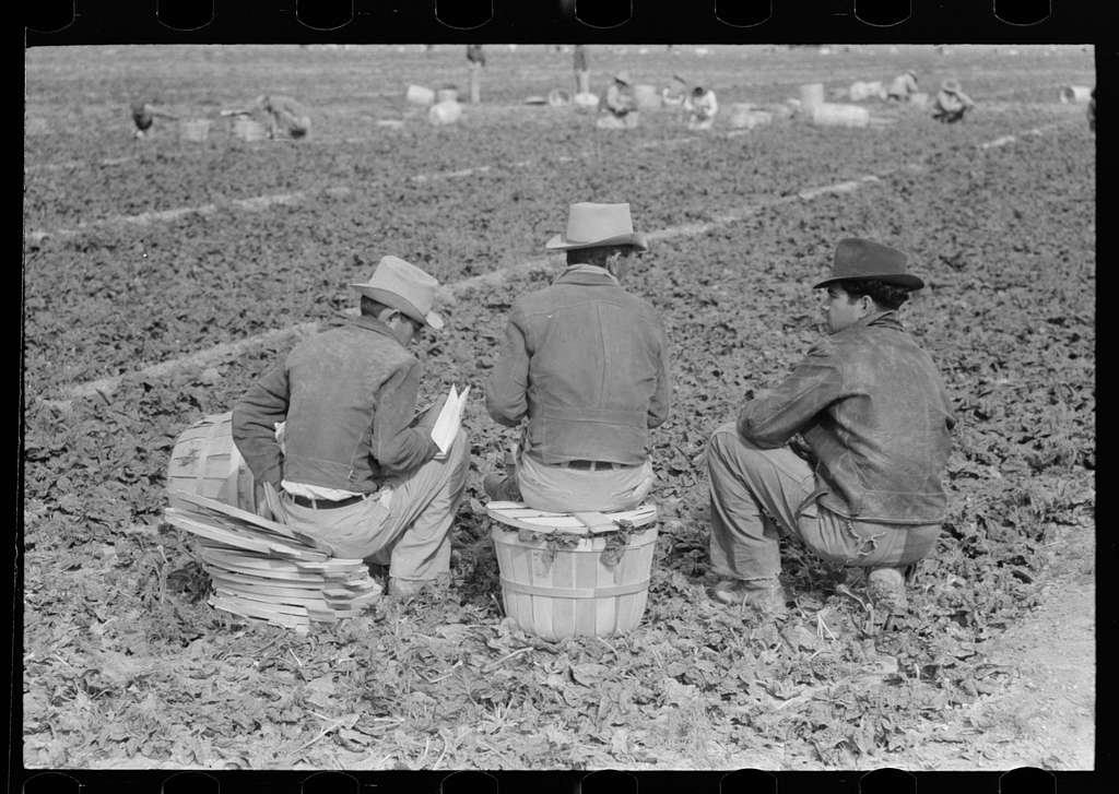 Group of Mexican field bosses in spinach field, La Pryor, Texas
