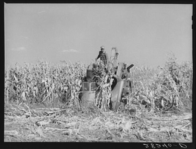 Harvesting hybrid seed corn with mechanical picker on Wayne Robinson farm. Marshall County, Iowa