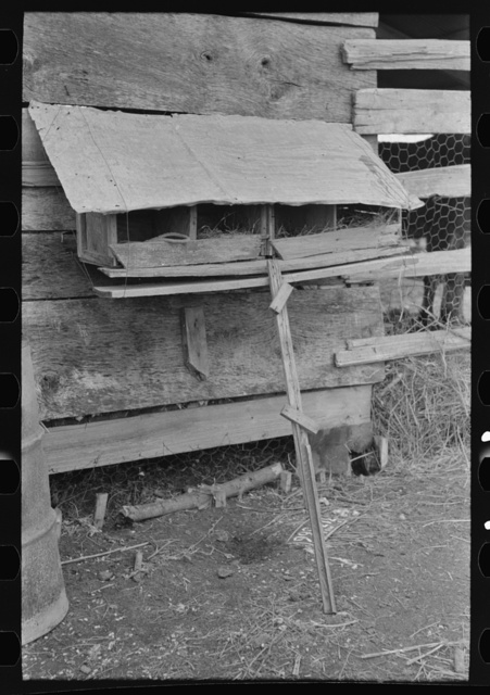 Hen nests at sharecropper's cabin near Pace, Mississippi. Background photo for Sunflower Plantation