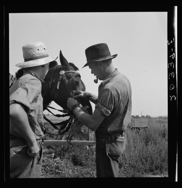 Hired man helps the farmers' oldest boy on the Myers farm. Washington, near Outlook, Yakima County