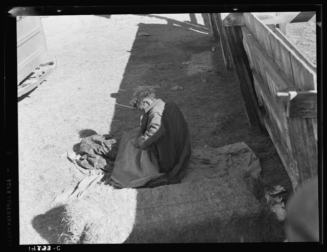 Hobo wakes up early in the morning from his bed alongside a corral. Imperial Valley, California