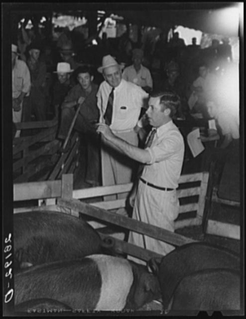 Hog auction. Central Iowa Fair, Marshalltown, Iowa