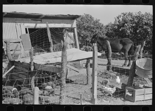 Hog house and chicken coop of Hidalgo County, Texas, farm
