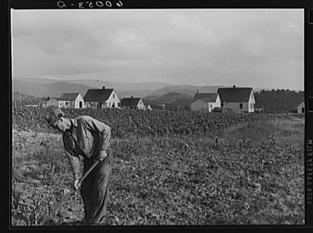 Homesteader working in garden. Tygart Valley, West Virginia