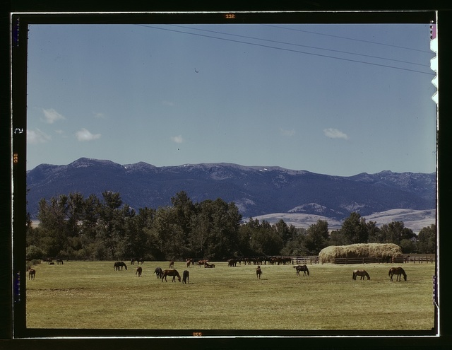 Horse breeding ranch, Grant Co., Oregon