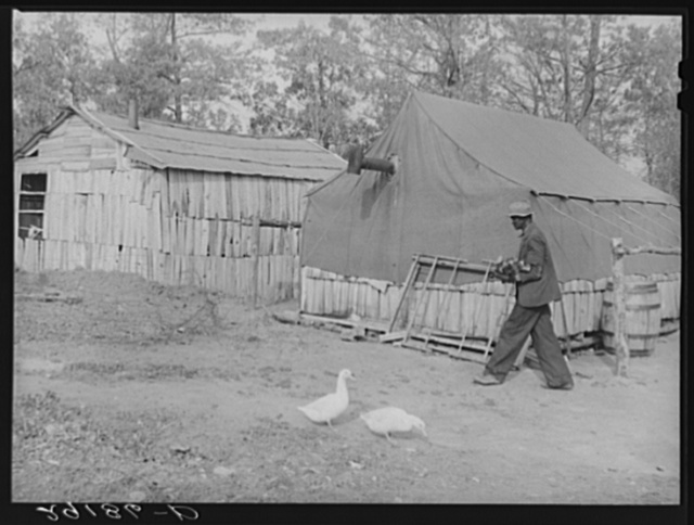 Houses of evicted sharecroppers. Butler County, Missouri