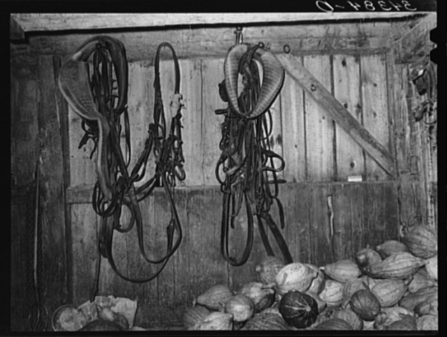 Interior of barn with harness and stored squashes, farm of FSA (Farm Security Administration) client in Orange County near Bradford, Vermont
