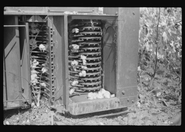 International cotton picker on Hopson Plantation, Clarksdale, Mississippi Delta, Mississippi