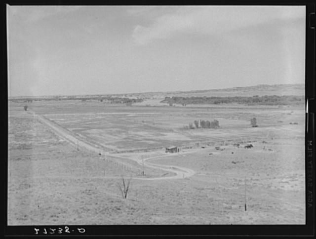 Irrigated sugar beet fields along Yellowstone River. Note grasshopper damage. Rosebud County, Montana