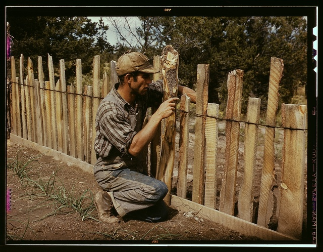 Jack Whinery, homesteader, repairing fence which he built with slabs, Pie Town, New Mexico
