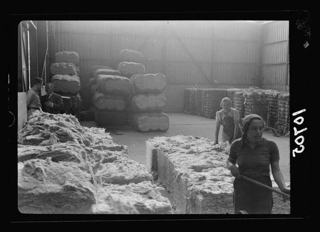 "Jewish factories in Palestine on Plain of Sharon & along the coast to Haifa. Near Acre, Kfar-Ata. The ""Ata"" Textile Co. Disintigration of cotton bales"
