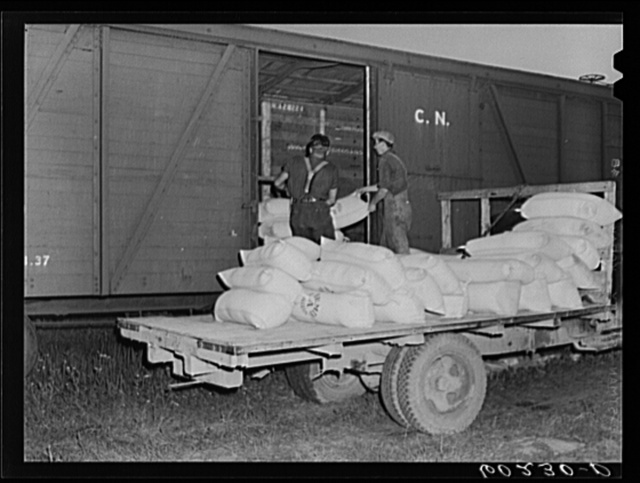 Loading freight car with seed for shipment to Canada cooperative seed exchange. Williams, Minnesota. This co-op was financed through a FSA (Farm Security Administration) loan which has been paid off