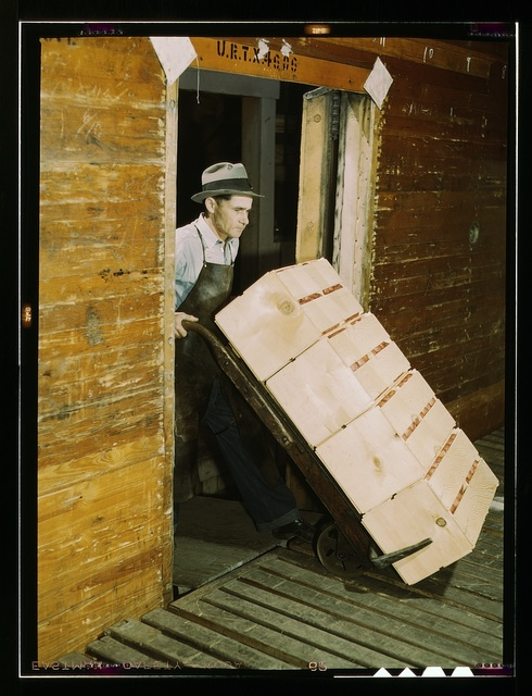 Loading oranges into refrigerator car at a co-op orange packing plant