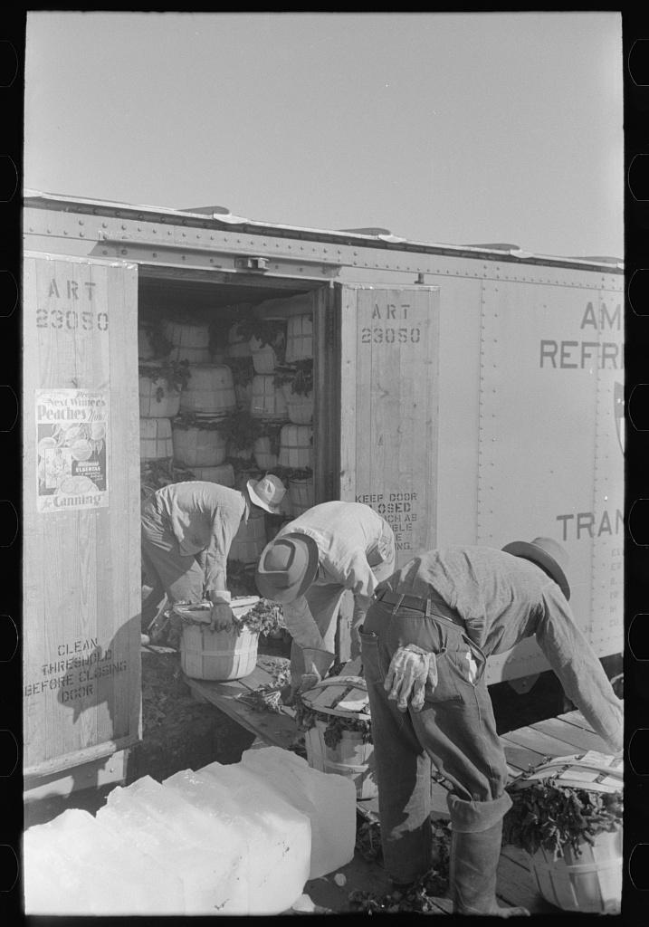 Loading spinach into refrigerator car, La Pryor, Texas