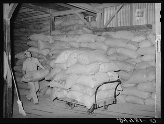 Loading truck with peanut shell feed. Peanut-shelling plant. Comanche, Texas