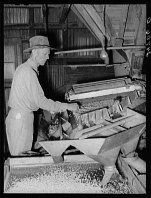 Machine for grading peanuts at peanut-shelling plant. Comanche, Texas