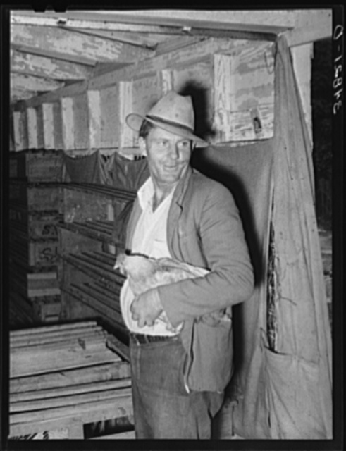 Man with chicken at cooperative poultry house. Brownwood, Texas