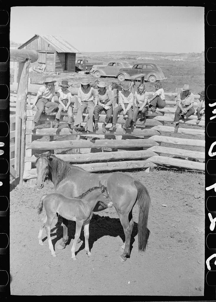 Mare and colt, Quarter Circle U roundup, Montana