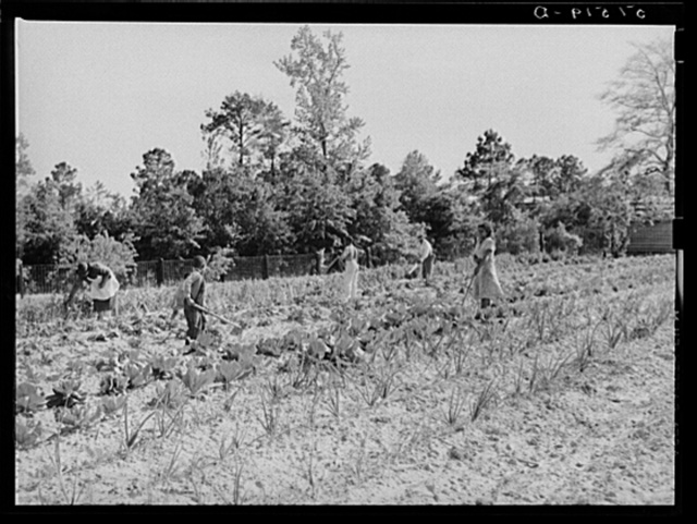 Mark and Angelina Parker and their family working in their home garden.  Gee's Bend, Alabama